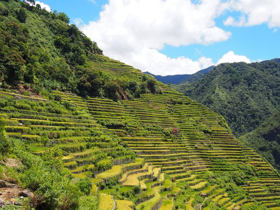 オススメの観光地・フィリピン・バナウェ。目を見張るような美しい棚田。